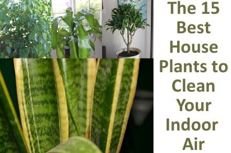 The 15 Best Houseplants To Clean Your Indoor Air