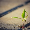 http://www.dreamstime.com/stock-image-tree-growing-crack-pavement-image25703161