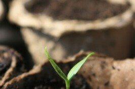 Backyard Farming Dilemma? Extension Can Help