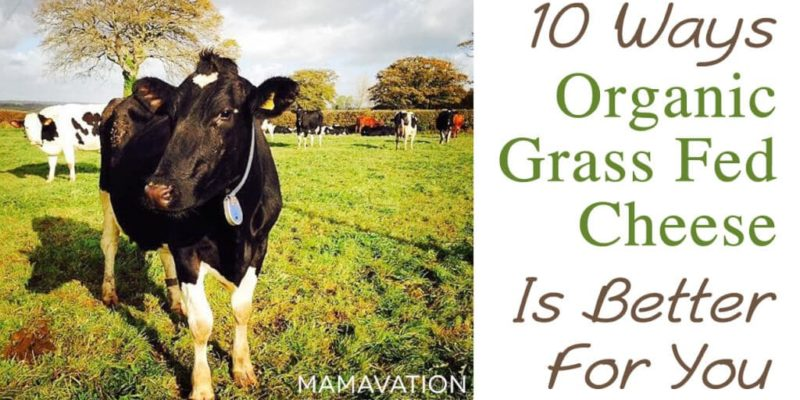 Grass Fed Dairy Cheese: The Top 10 Benefits