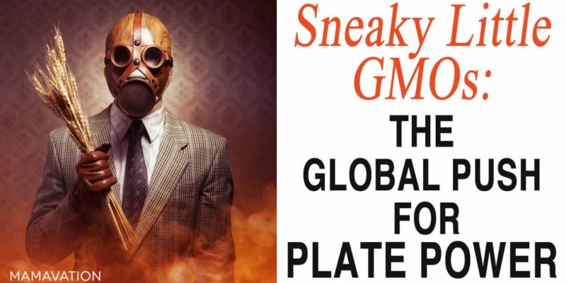 Sneaky Little GMOs: The Global Push for Plate Power