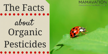 Organic Pesticides: The Facts That You Need To Know