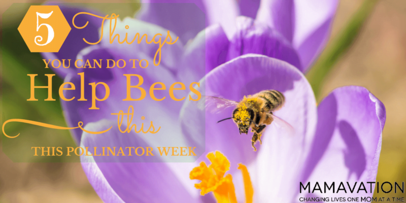 Help Bees: 5 Things You Can Do to this Pollinator Week