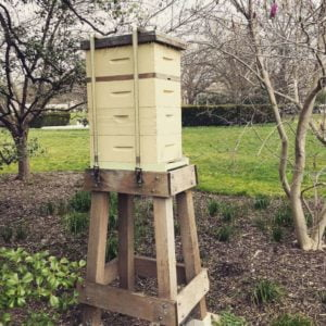 White House Beehive