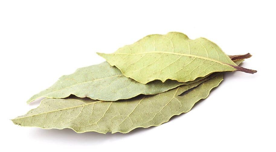bay-leaf