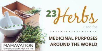 Medicinal Herbs: 23 Herbs From Around the World 1