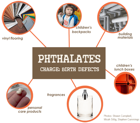 phthalates-infographic