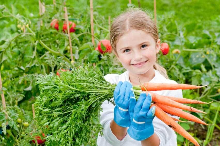 organic-food-and-preservation Organic food