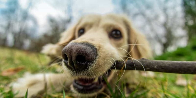Chemicals and Canines: What you Need to Know About Dogs, Pesticides, and Cancer 2