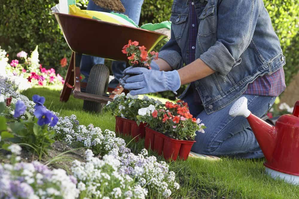 Ways Gardening Makes You Happy