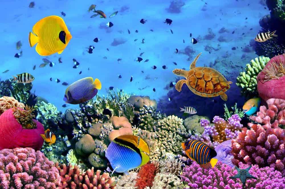 corol reef
