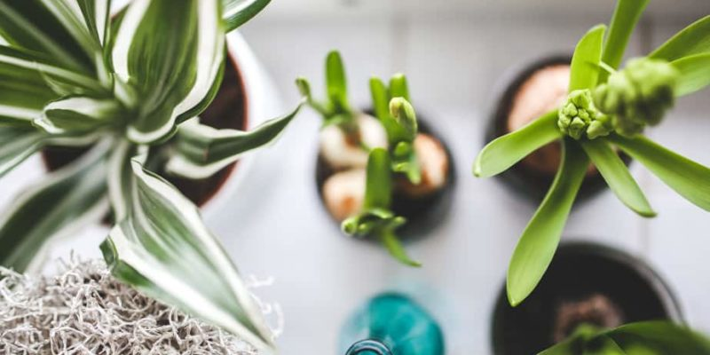 Purify The Air Inside Your Home Using The Same Plants NASA Recommends 9