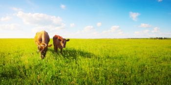 """Made in USA"" Label Legally Used on Grassfed Beef From Overseas 5"
