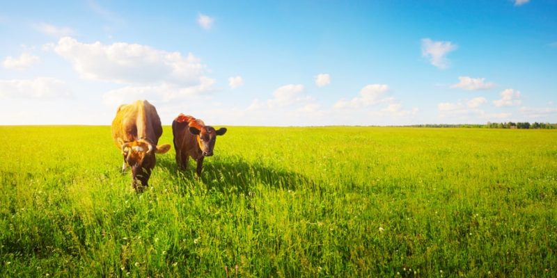 """""""Made in USA"""" Label Legally Used on Grassfed Beef From Overseas 5"""