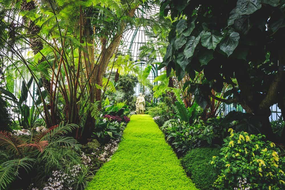 houseplants that bring good health