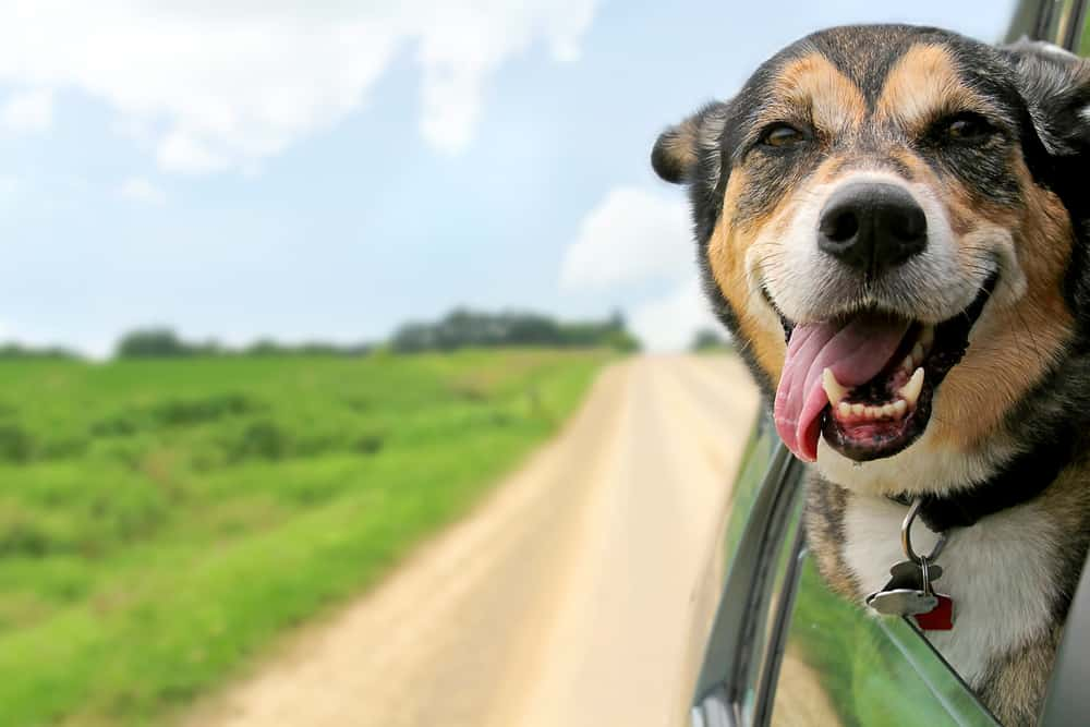 non-toxic dog food investigation