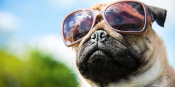 Muzzle dog in pink sunglasses