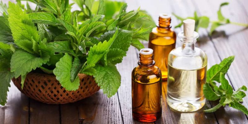 5 herbs to grow in your background that help with flu season