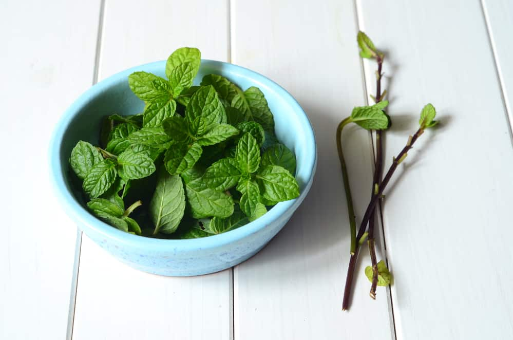 5 herbs to grow in your backyard that helps with flu season