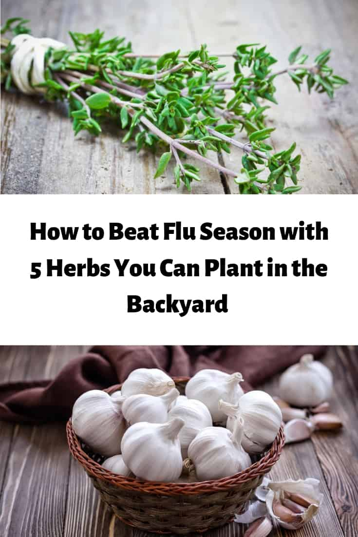 How to beat the flu season with 5 herbs you can plant in your backyard