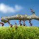 Safer Pest Control: Toxic vs. Non-toxic Insect Repellant Brands Around Children