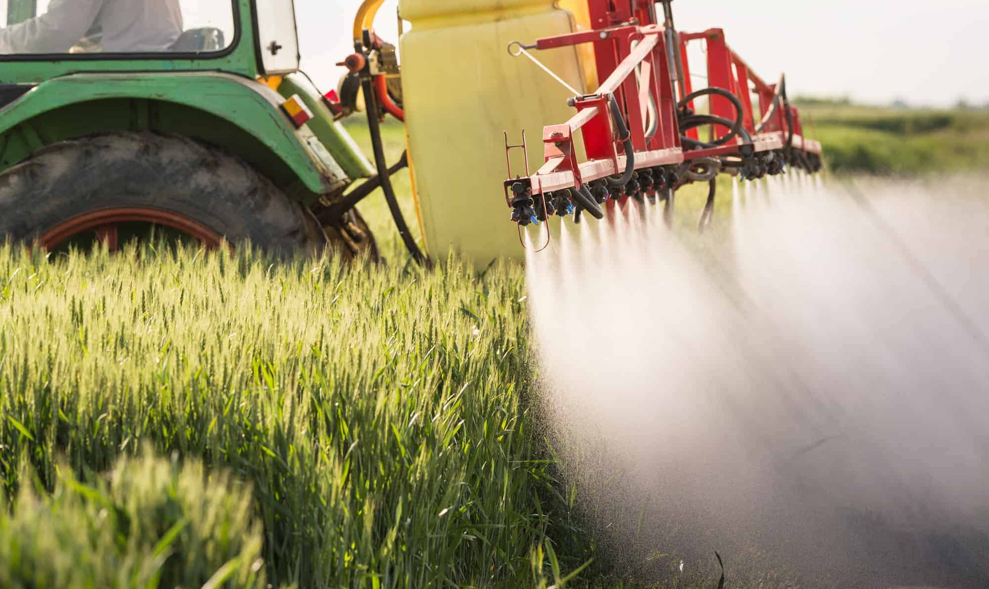 Tractor spraying wheat field with glyphosate