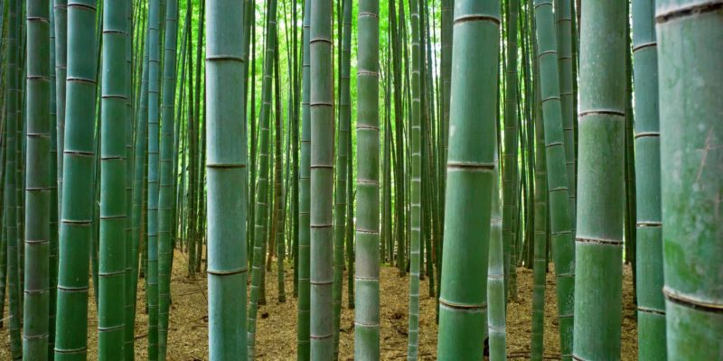 Everything You Ever Wanted to Know About Bamboo In the Kitchen