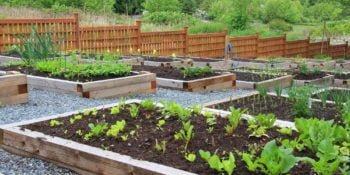 Organic & Non-Toxic Gardening--Tips & Resources for a Chemical-Free Garden