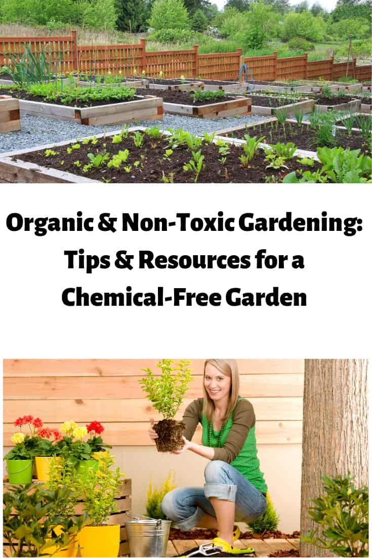 Would you like to garden without the use of harmful chemicals? Check out these tips and tricks from Mamavation about how to have an organic garden.