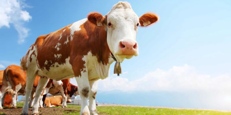 Organic Beef Is More Nutritious Than Regular Beef Study Finds