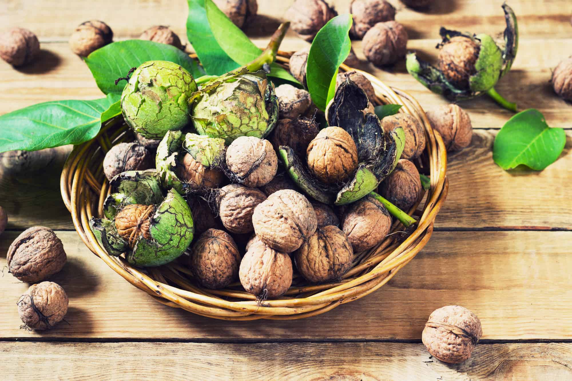 Walnuts in green husks with leaves on a wooden background