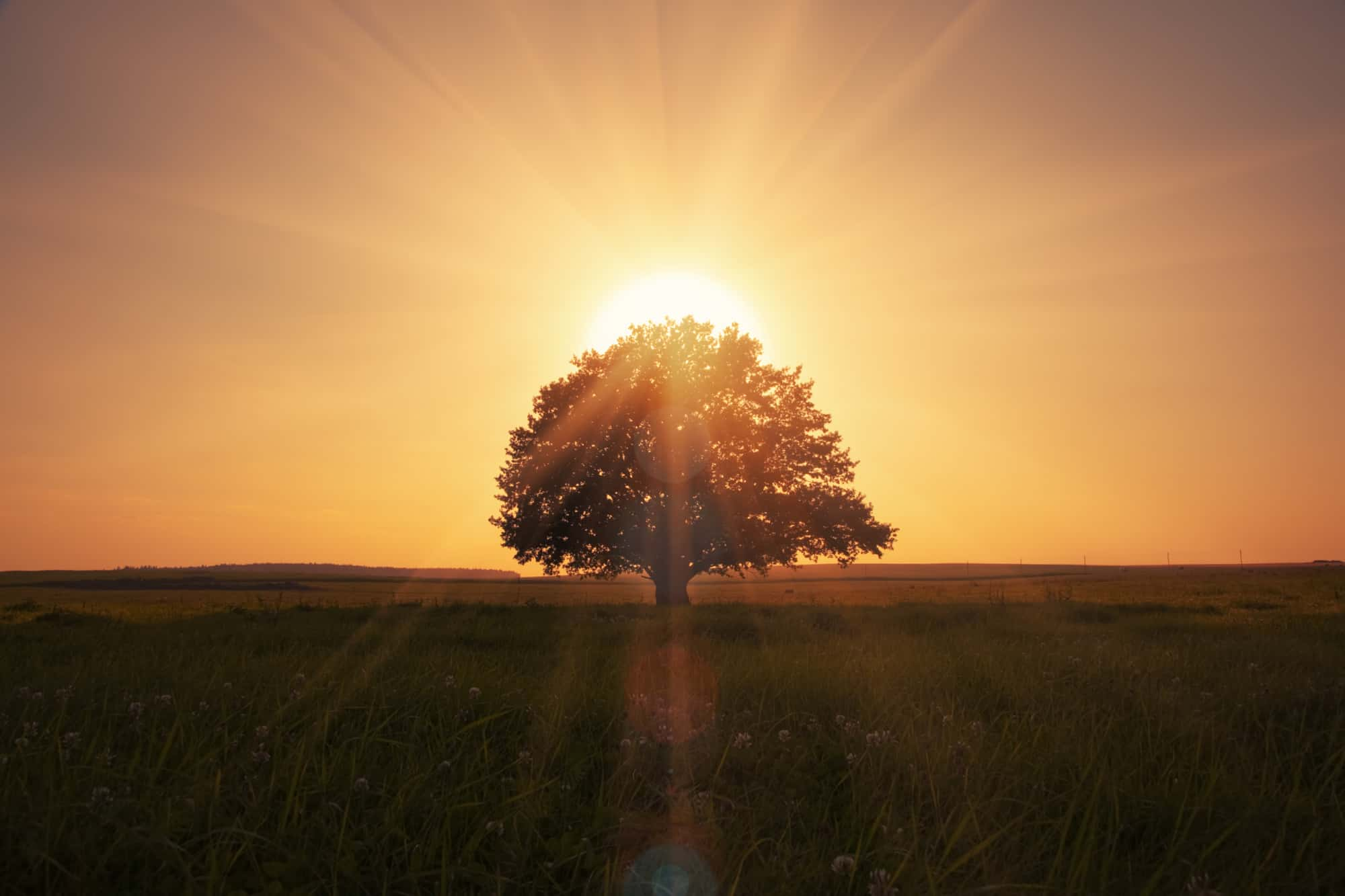 magical sunrise in California with tree