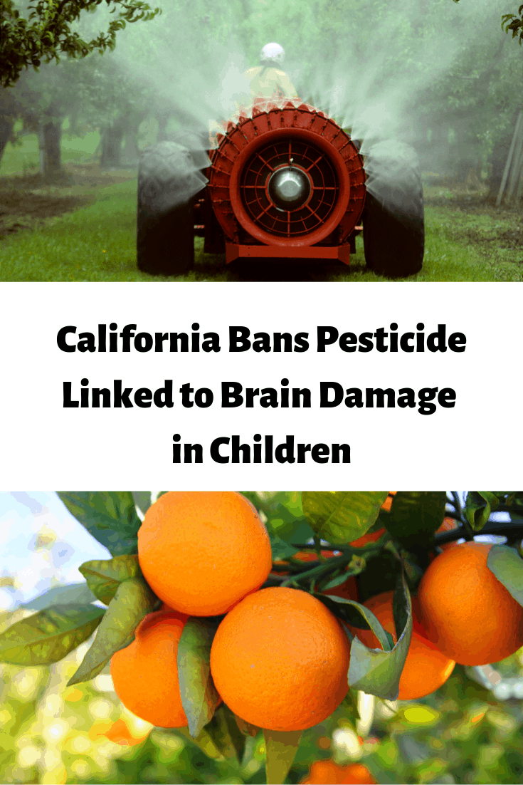 California Bans Pesticide Linked to Brain Damage in Children--Chlorpyrifos 1