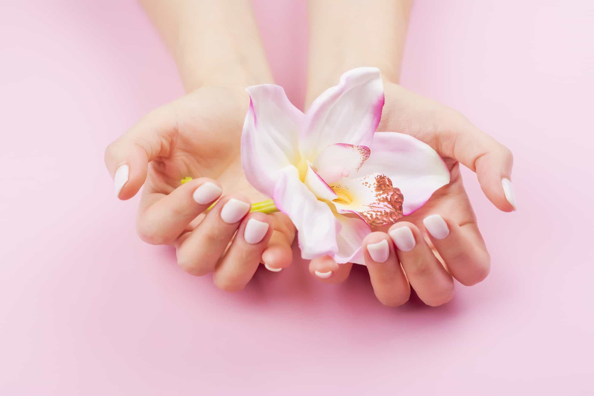 Females hands with pastel manicure are holding an orchid flower