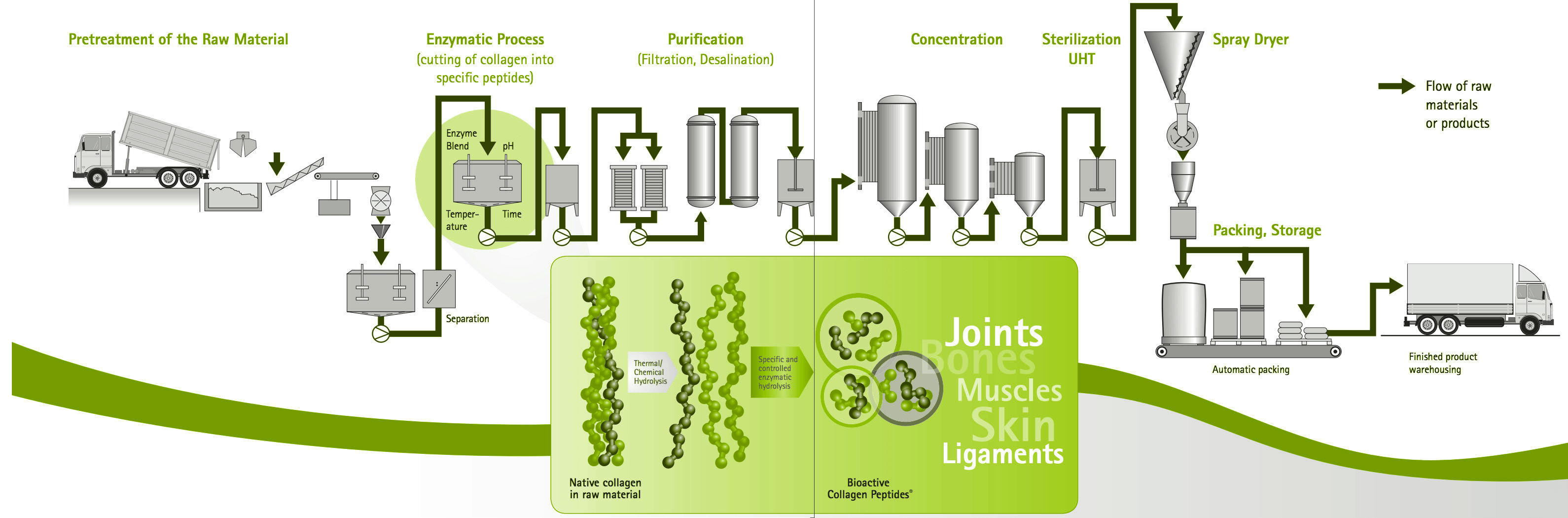 processing of collagen from raw materials to product