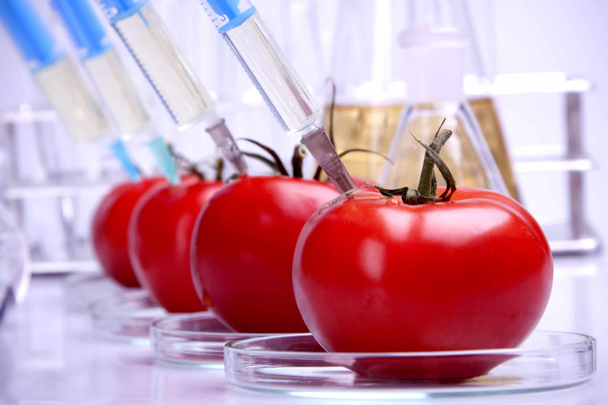 Genetically modified food in laboratory.