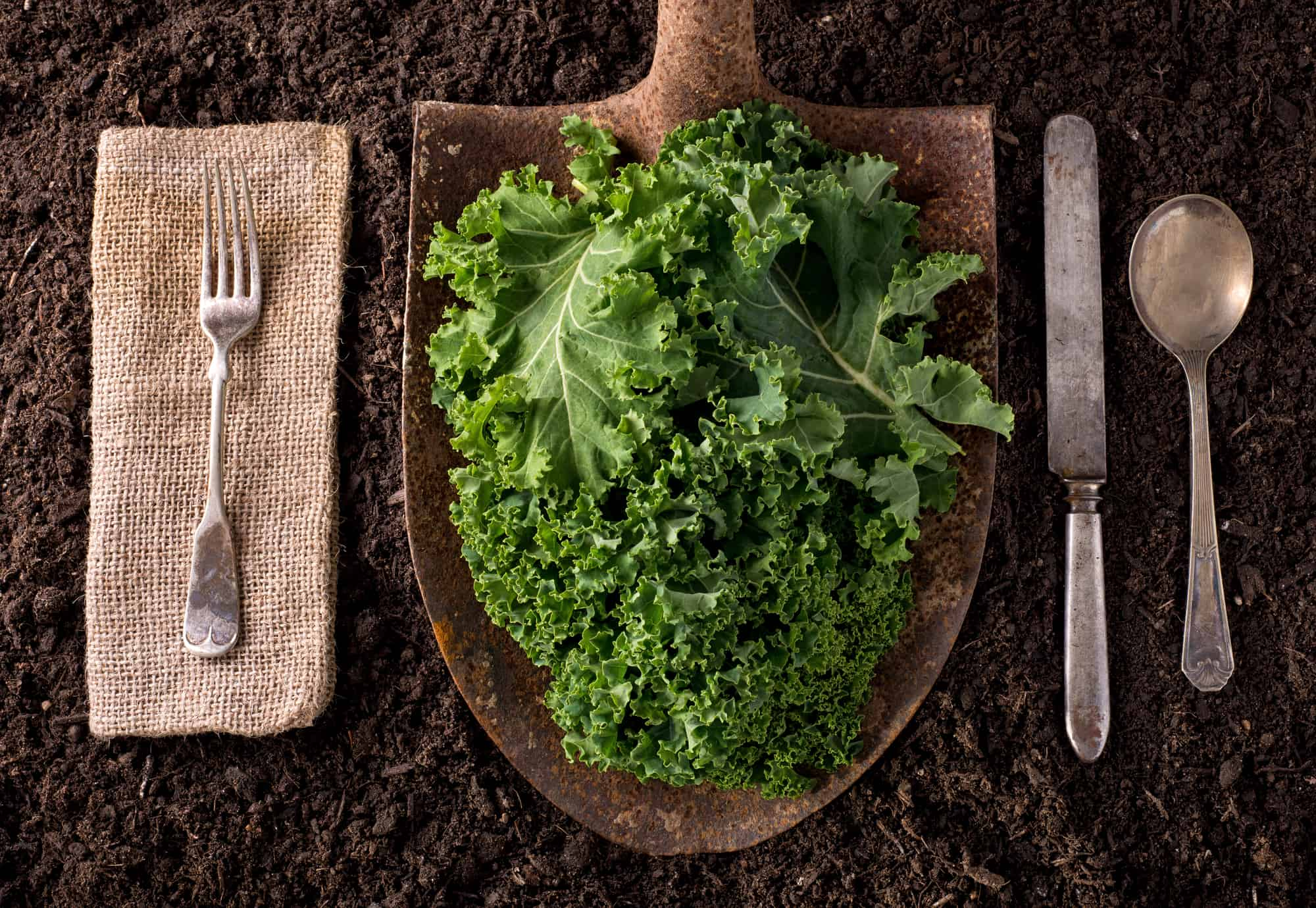 kale from an organic farm on a shovel