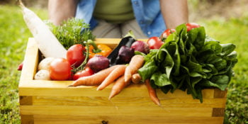 Organic-Friendly Herbicides & Pesticides for Your Vegetable Garden 4