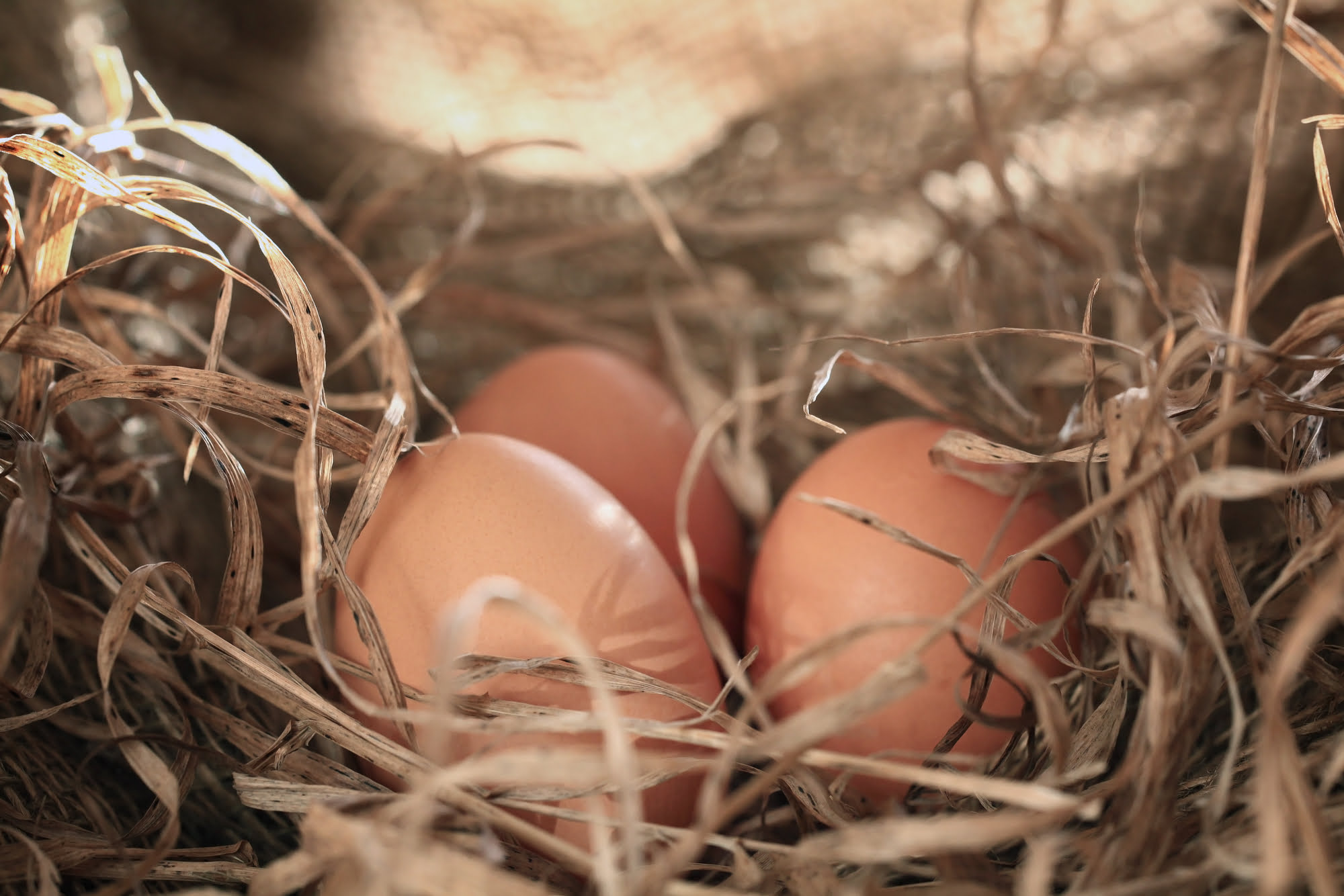 Why I'm Keeping My Backyard Chickens But Throwing All My Eggs Out 1
