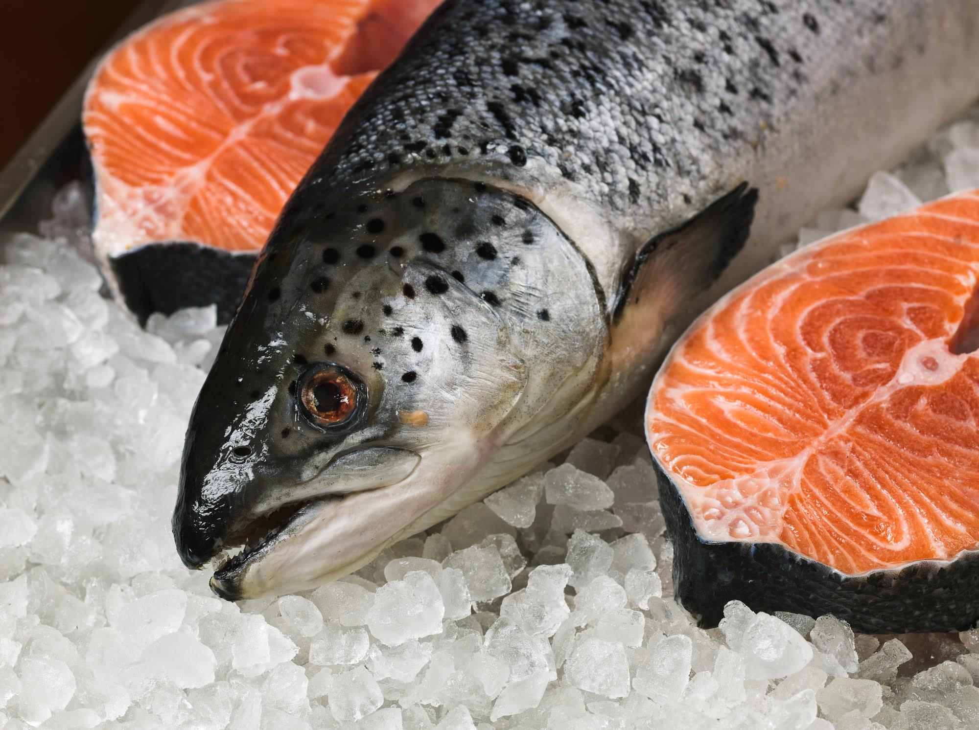 Fresh atlantic salmon on ice