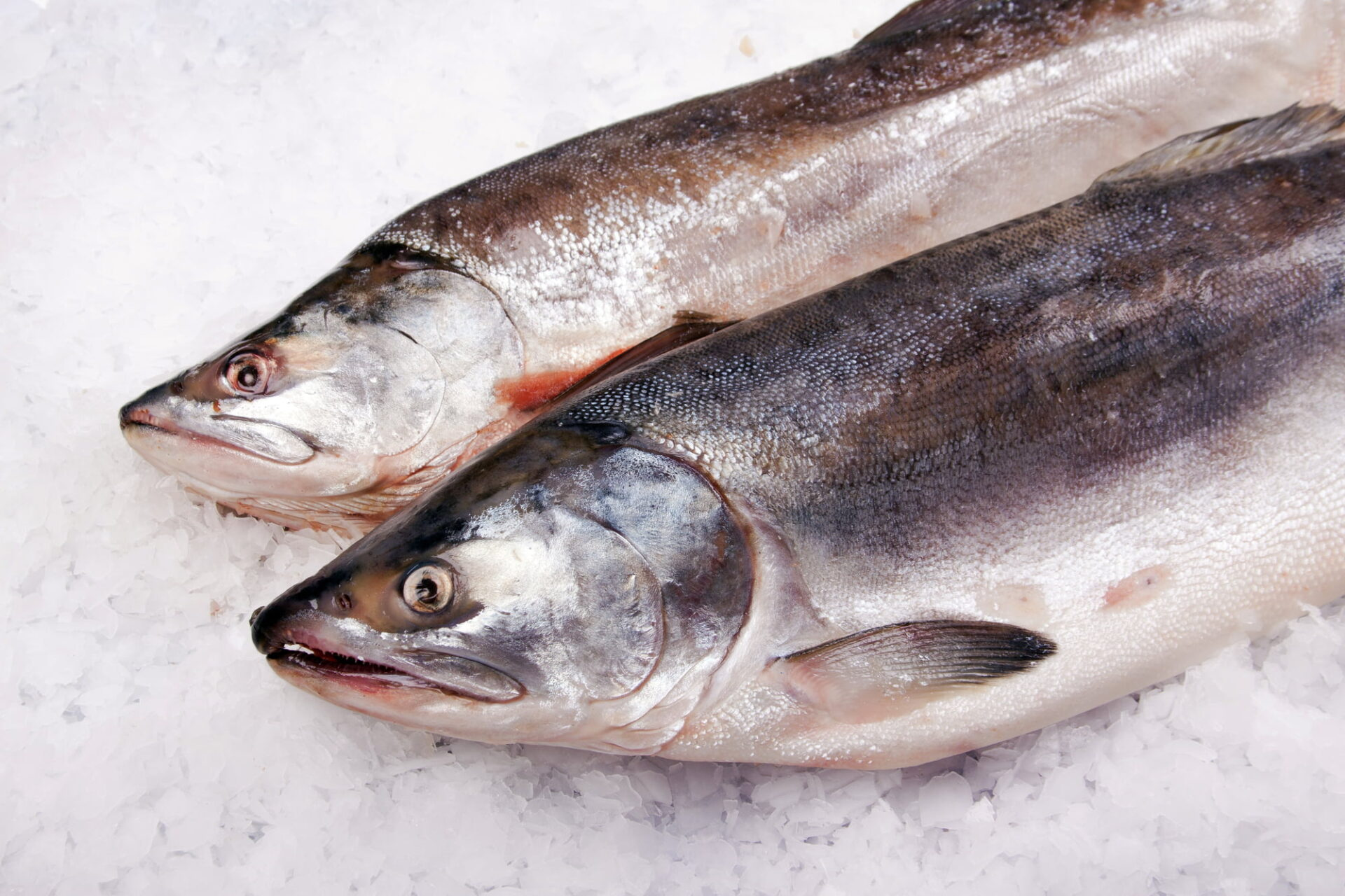 Farmed salmon from Norway