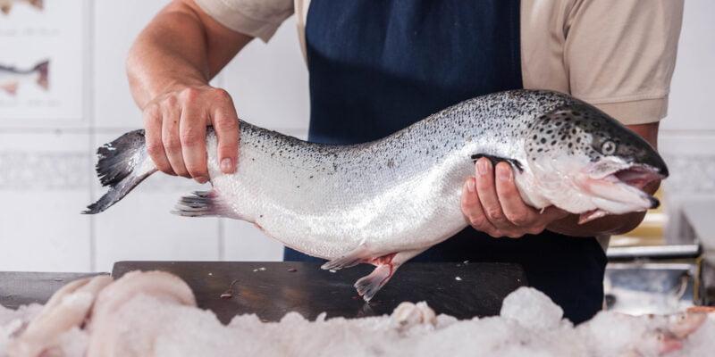 fish monger holding atlantic salmon over ice