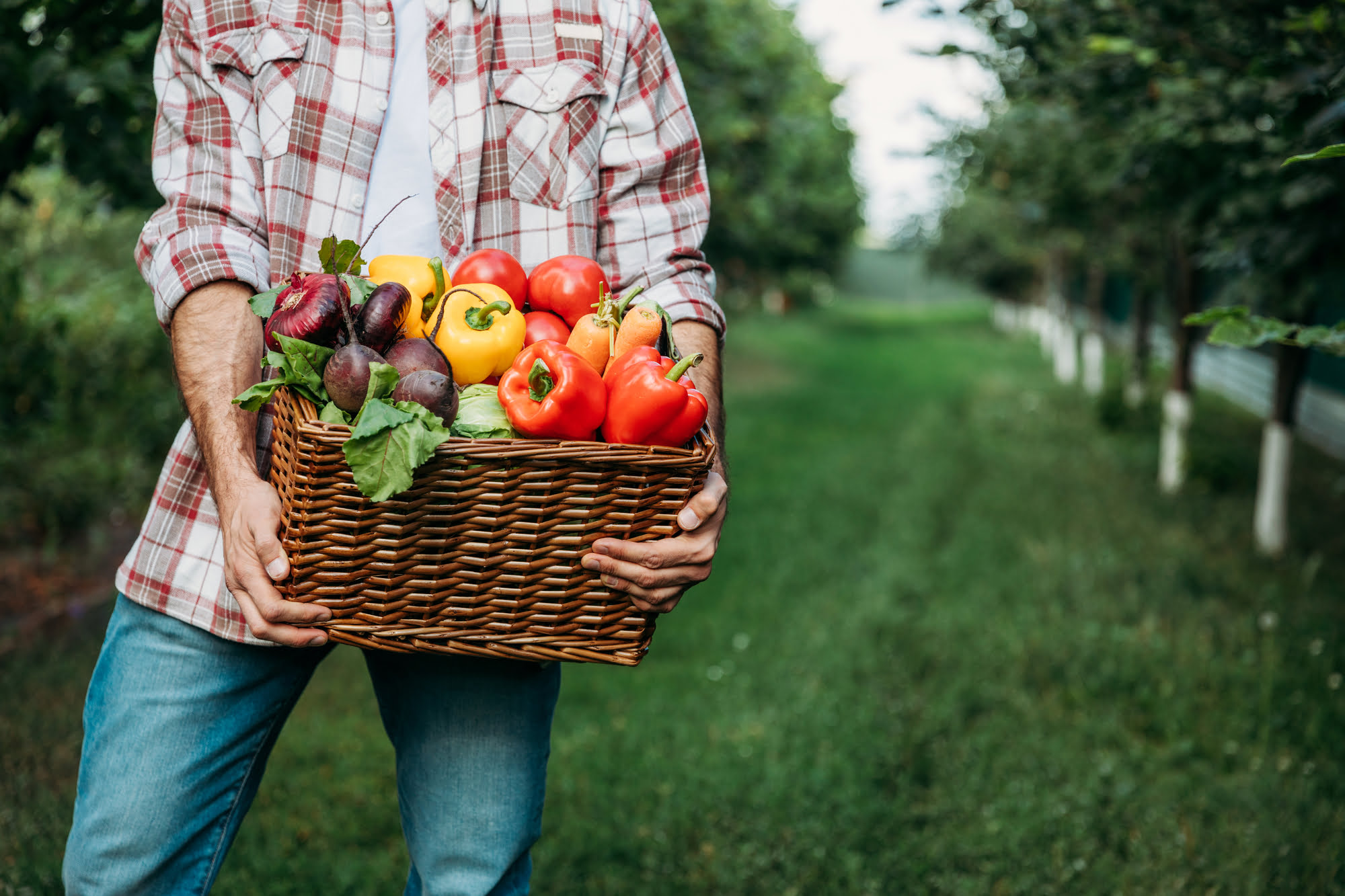 woman holding basket of organic produce