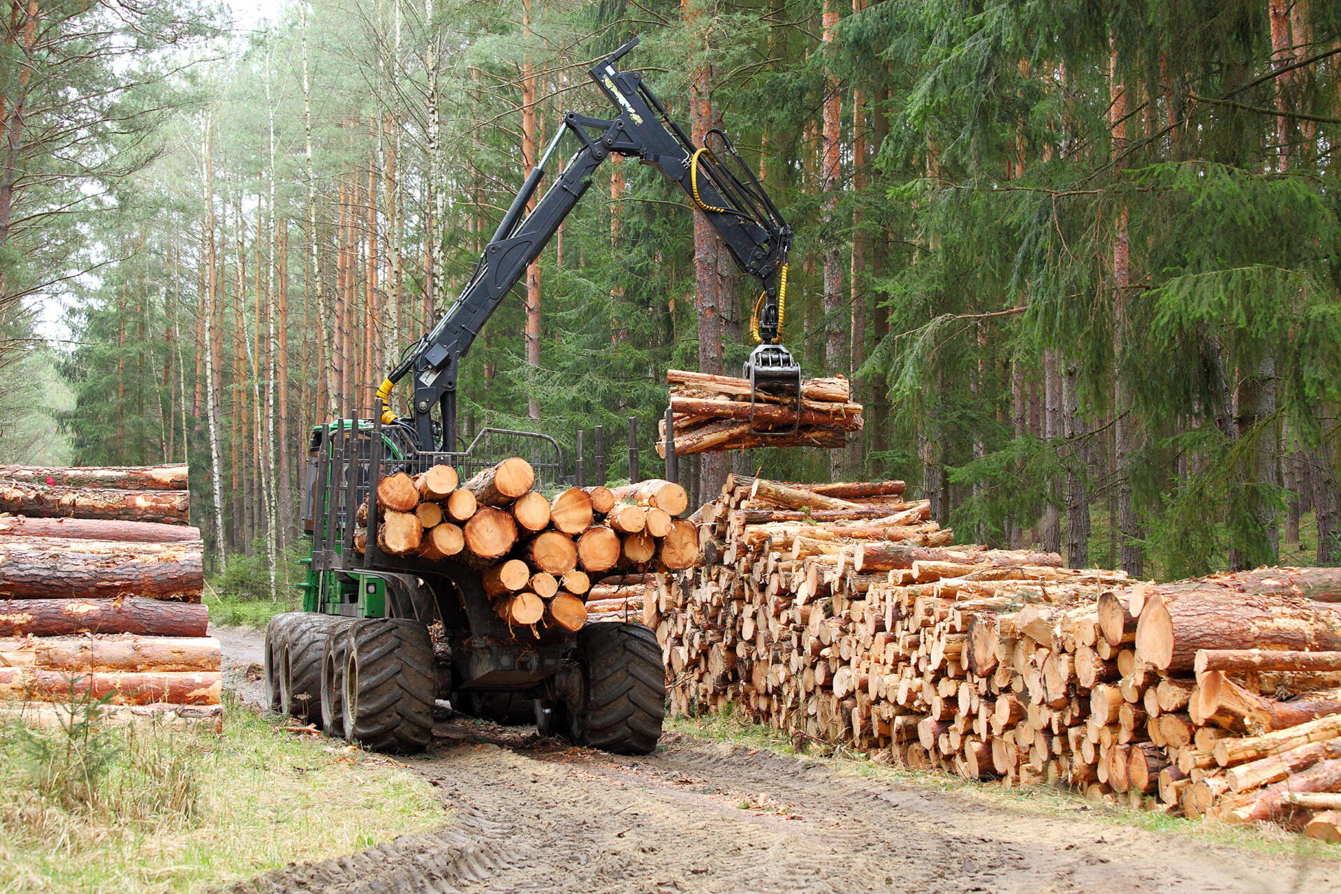 The harvester working in a forest. Harvest of timber