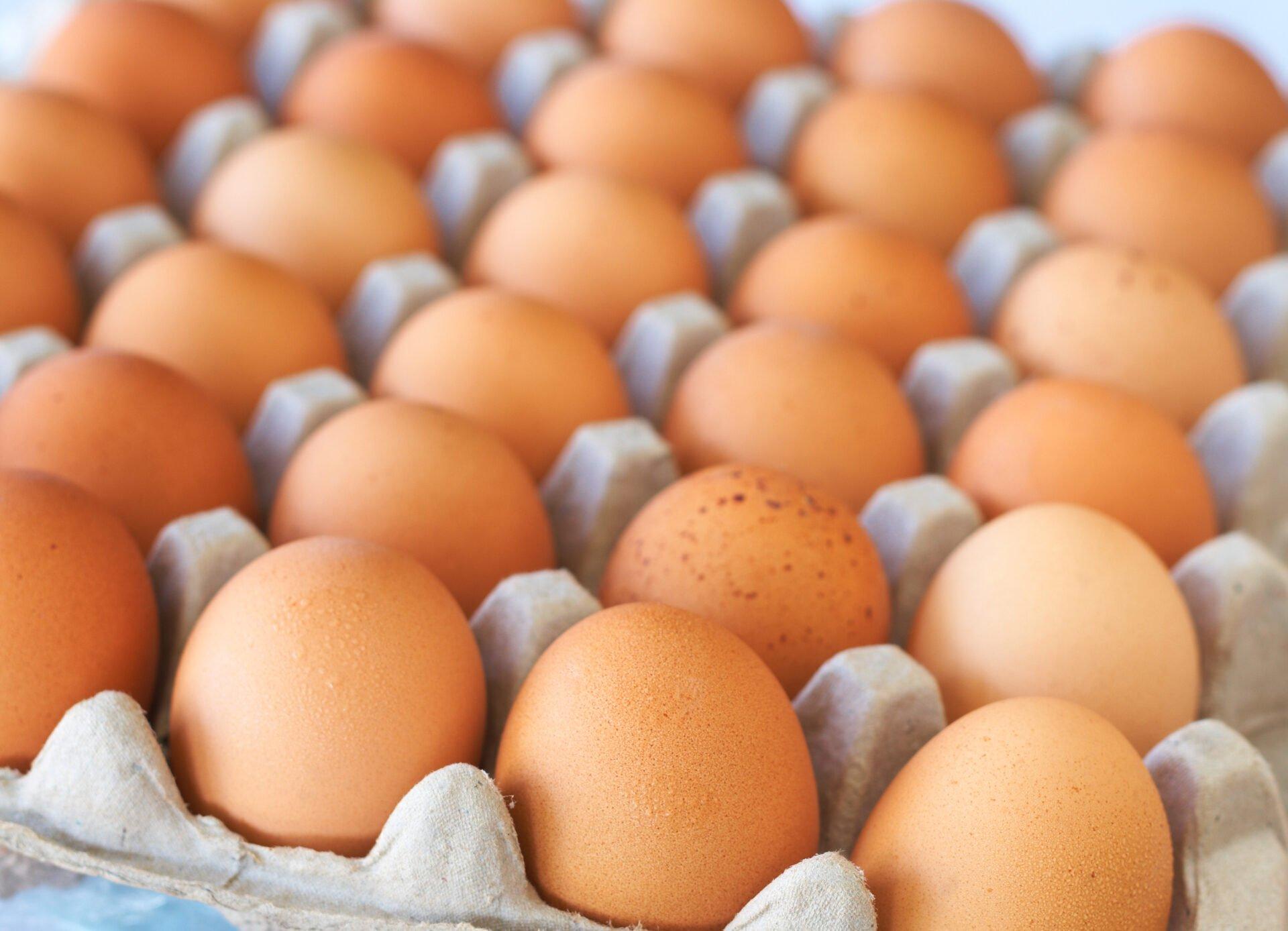 Full tray of freshly laid free range organic eggs